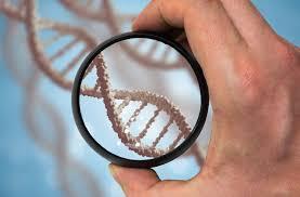 ДНК тест в Києві