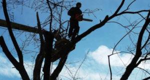 обрізка дерев в червонограді